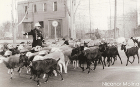 castelao 1945